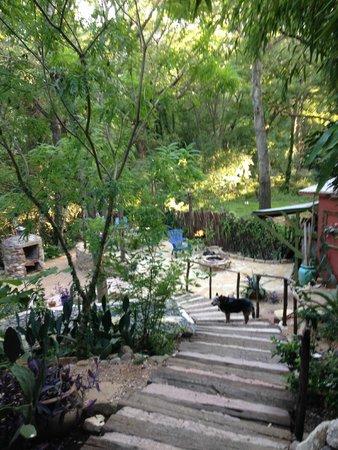 Casa Kenwood Guesthouses: Backyard