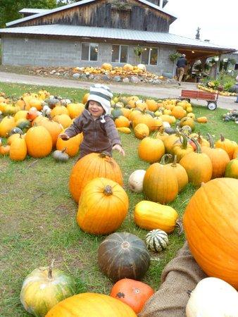 The Garden Cafe at Pond Hill Farm: Fall @ Garden Cafe PHF
