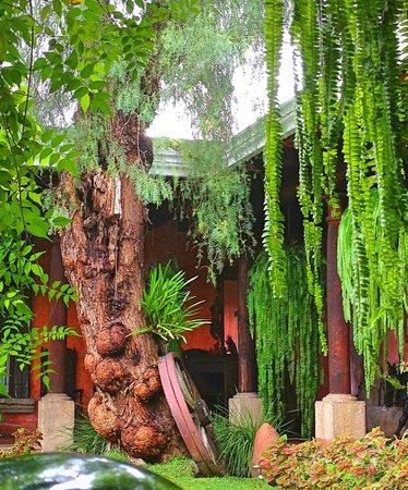 La Casa de los Suenos: Garden view