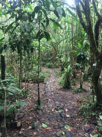Parque Etnobotanico Omaere