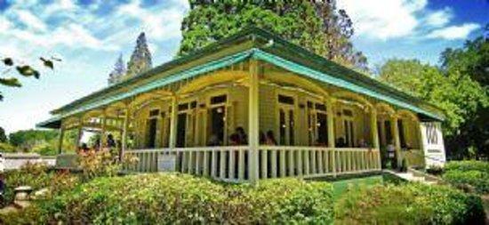 Queen Elizabeth Park : the stunning cafe cecille