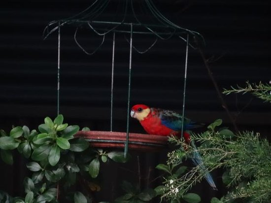 Edge of the Forest: Native birds love the gardens
