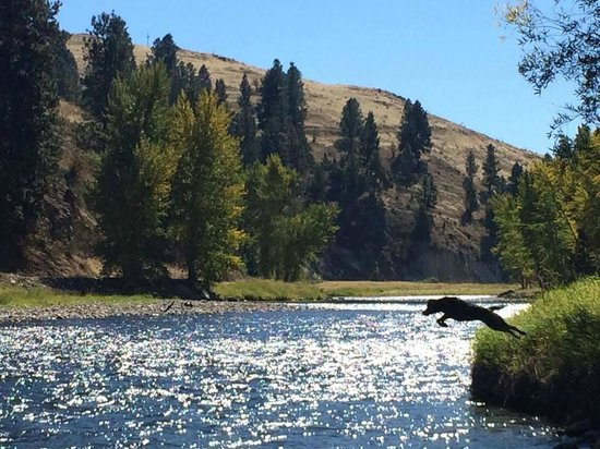 Triple Creek Ranch : Fly fishing with a dog named River
