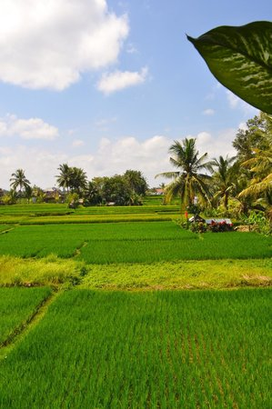 Nirwa Ubud Homestay : view from balcony
