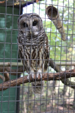 Kentucky Down Under Adventure Zoo: owl
