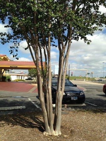 La Quinta Inn San Antonio Lackland: front lot