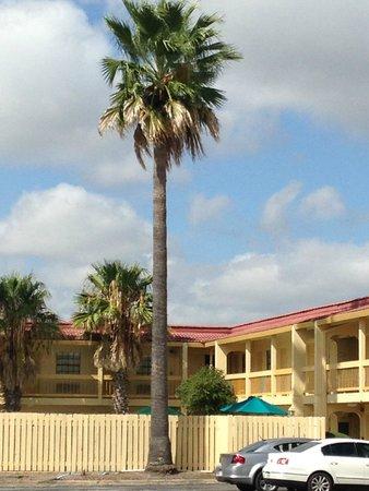 La Quinta Inn San Antonio Lackland: palm