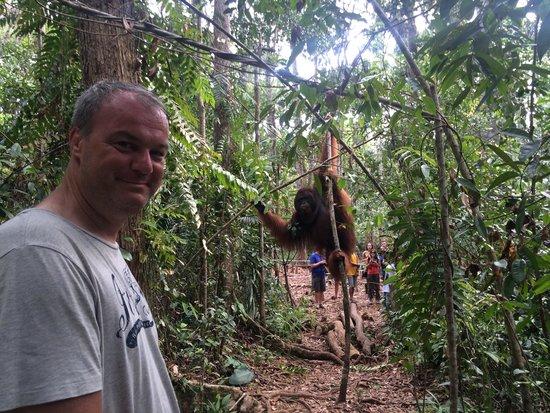 Rimba Orangutan Eco Lodge: Getting as close as you should to an orangutan