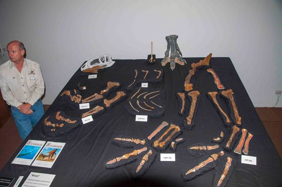 Australian Age of Dinosaurs: Collection room guided tour 2