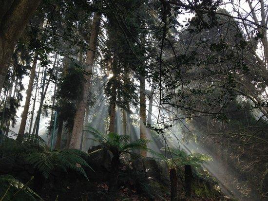 The Sebel Launceston: Nearby Cataract Gorge