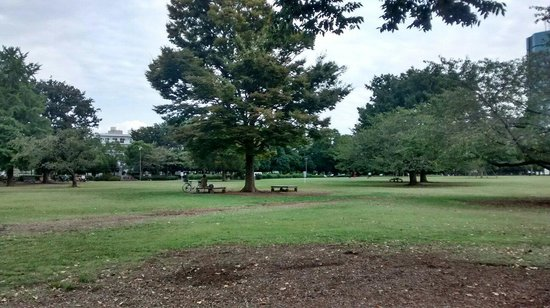 Kiba Park: View from a bench