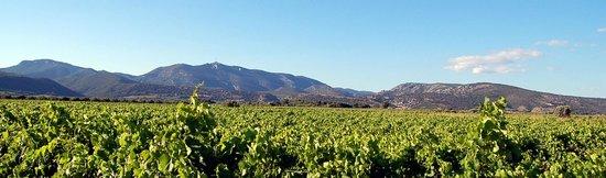 Domaine Virgile Joly: Le vignoble Saint-Saturnin
