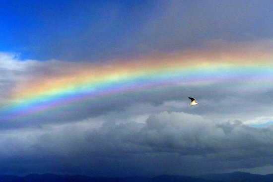 Miranda Shorebird Centre: Rainbow seen while birdwatching