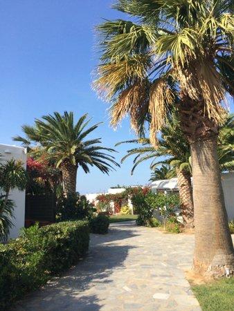 Yria Island Boutique Hotel & Spa: palm trees