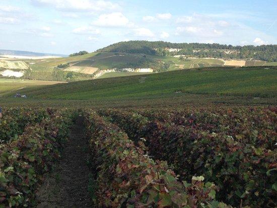 Champagne Domi Moreau: The tour vineyards