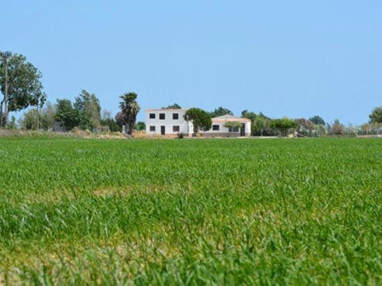 Deltebre, Spanje: Campos de arroz en el Parque Natural del Delta del Ebro en el mes de junio.
