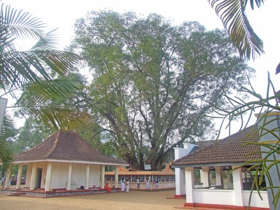 Badulla, Sri Lanka: Bo-tree