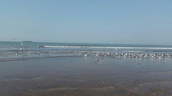Sahyadri Tourist Home : Murud beach