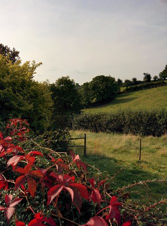 Todsworthy Farm Holidays: a view down the valley