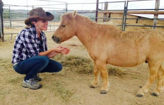 Stagecoach Trails Guest Ranch: Beautiful horses - big & small!
