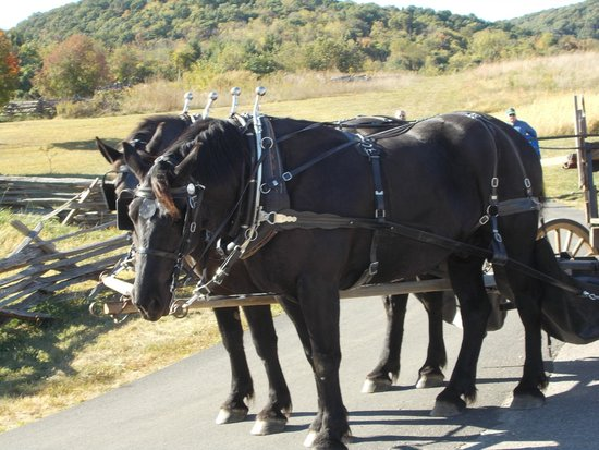 Frontier Culture Museum: Horse Carriage Ride