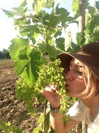 Tenuta Torciano Vineyards: great grapes