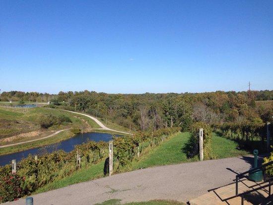 Elk Creek Vineyards: Beautiful view!