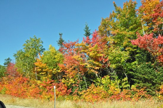 Colonial Motel: Fall Colors Early