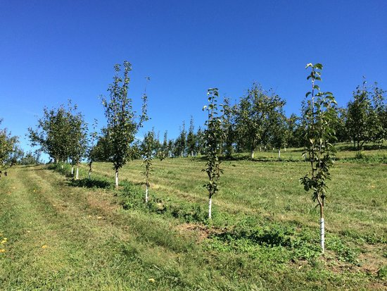 Sky Top Orchard: young trees
