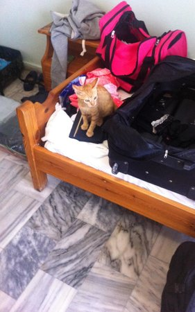 Nikos Studios: Cat was in our room when we first walked in