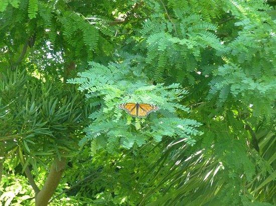 Miami Beach Botanical Garden: Butterfly
