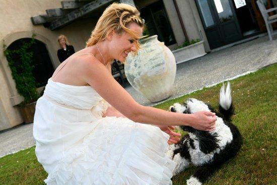 Lavender Hill: в гостинице живет очень дружелюбная собака