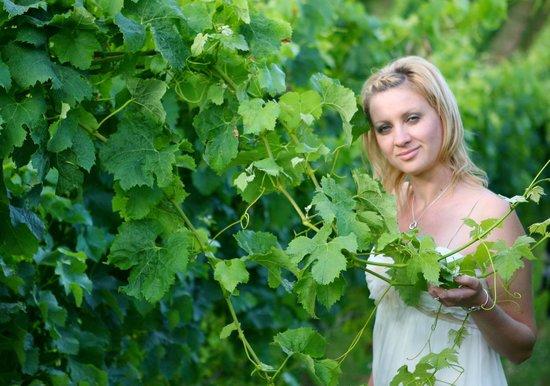 Lavender Hill: виноградная лоза , виноградник принадлежит хозяевам отделя и ведет в замечательный ресторан