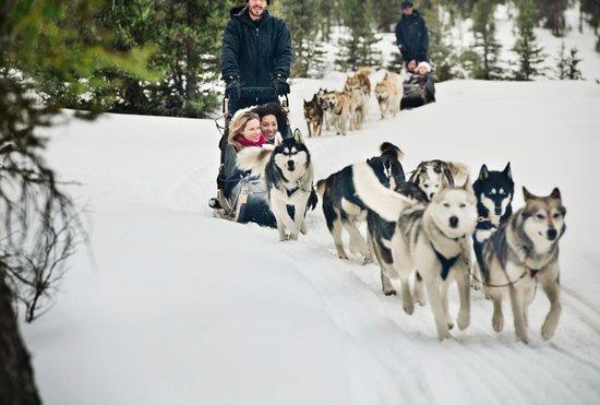Canmore, Canada: Dog sledding in Kananaskis