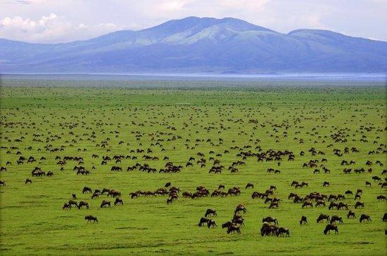 Seronera: serengeti