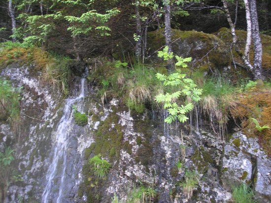 Husedalen Valley: вода течет прямо под травой сплошным потоком