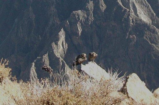 Condor's Cross: they