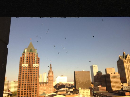 Hyatt Regency Milwaukee: this is just one little corner of what was a sea of bugs...