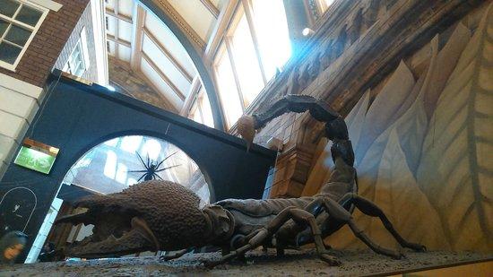 Museum Of Natural History London Tripadvisor