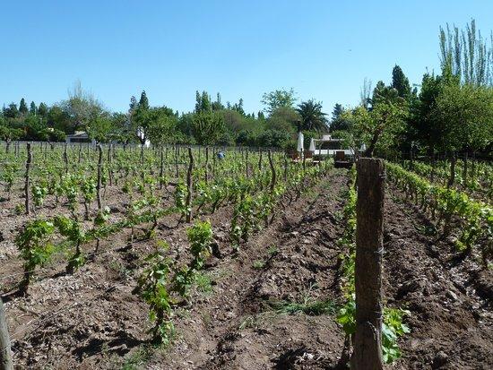 Finca Adalgisa Wine Hotel, Vineyard & Winery: Pool in the vineyards