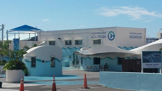 Winter Hope Picture Of Clearwater Marine Aquarium