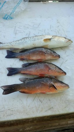 One Love Charters: Keepers!  A sea trout and some snapper.