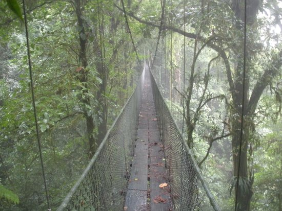 Costa Rica Unique Transfers & Tours: hike in the rain forest on suspended canopy bridges