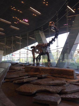 Perot Museum of Nature and Science: Bones