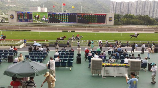 Sha Tin Racecourse : The racecourse, horses getting to the starting point
