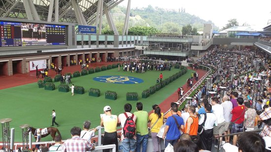 Sha Tin Racecourse : Parade ring, good place to take a close look on each horse