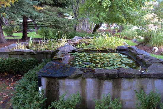 Kohan Reflection Garden: Water plant tanks.