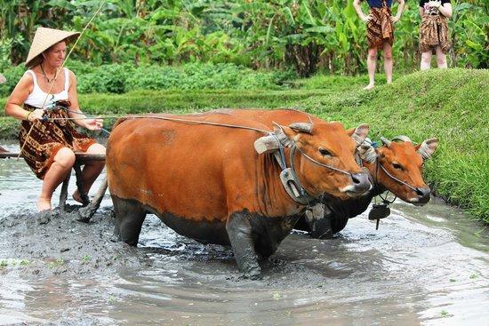 Noosa Bali Tours: a day in a farm