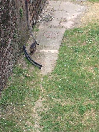 Milano da Vedere : Житель замка Сфорца