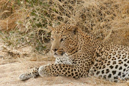 Okonjima Game Reserve : Leopard
